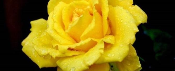 rosa-colore-significato_NG3